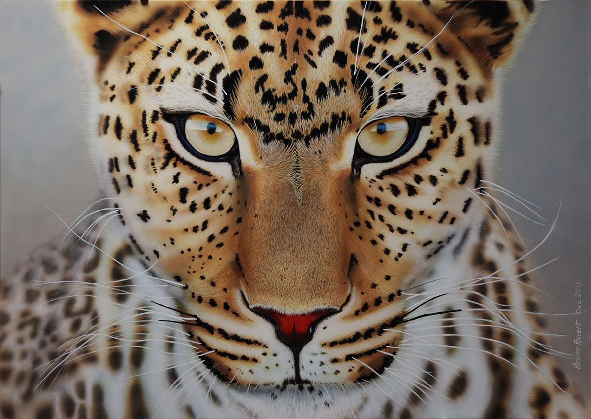46 decorum cinema aerographie leopard
